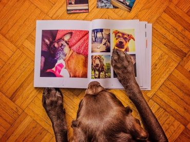 #iflmDog the Book
